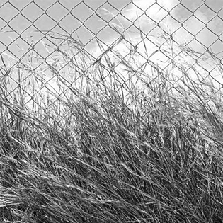 Tall grass on chain-link fence